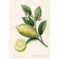 Vintage poster citron, 35*50 – Sköna ting