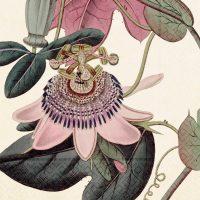Pappersservett passionsblomma 20-p – Sköna ting