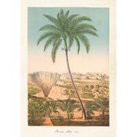 Poster Palm 35x50cm
