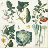Servett Grönsaker 20-p