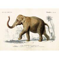 Vintage Poster Elefant 70×50 cm